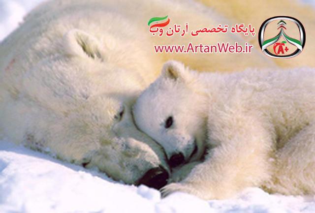 http://up.artanweb.ir/view/2000863/sleep%20animal.jpg